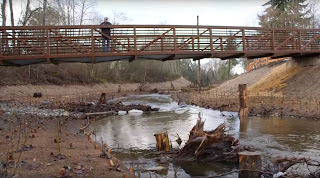 pedestrian bridge with person on it looking at creek with newly planted land with woody debris