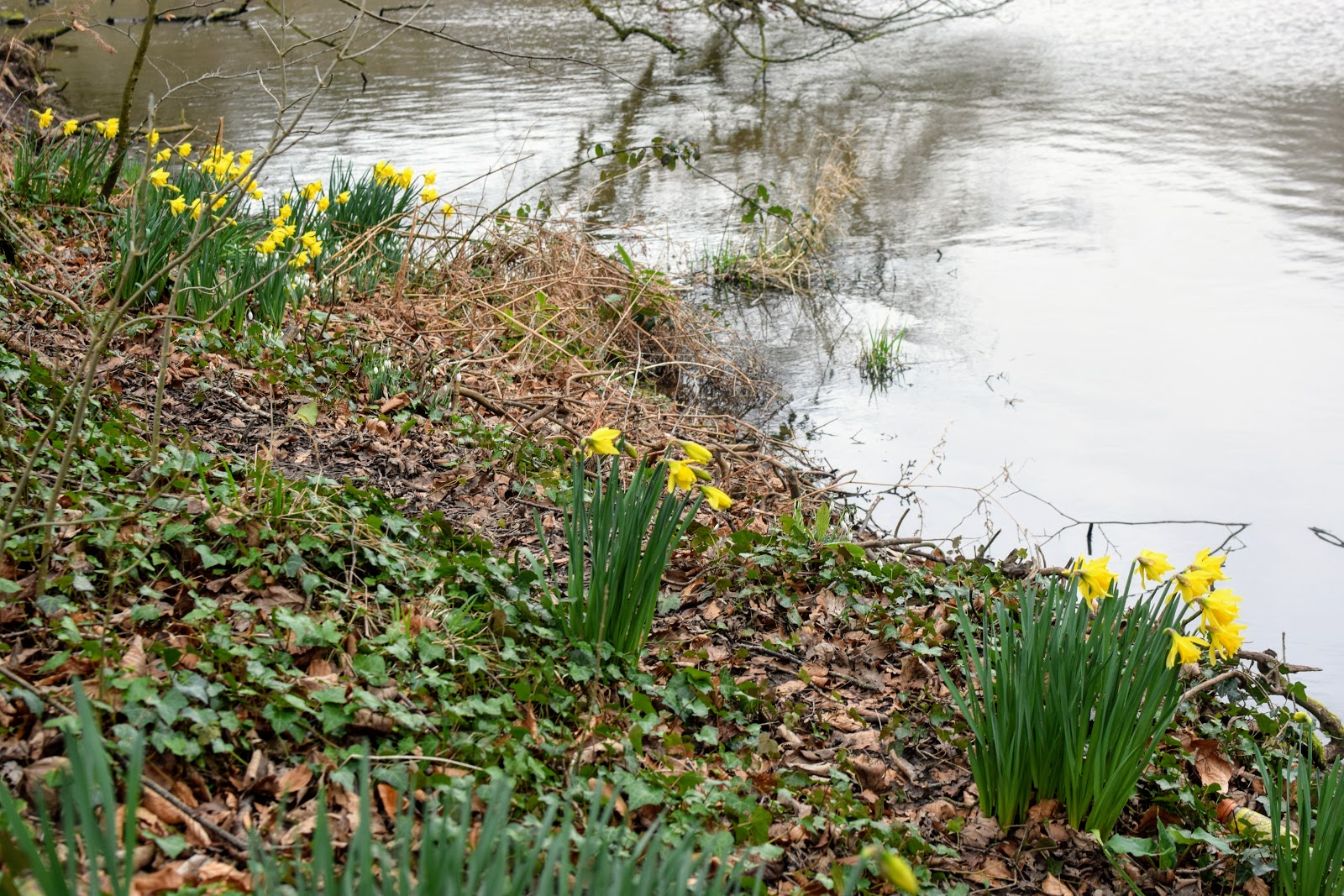 , Signs of Spring at Withybush Woods