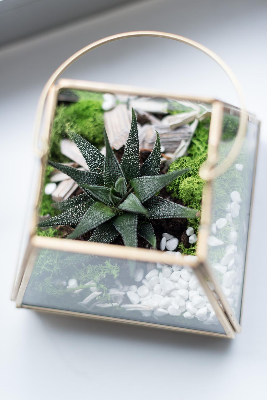 andysparkles-orthomol-bloggerevent-pureandgreen-max-giesinger-urban-gardening-koeln-zigarrenfabrik