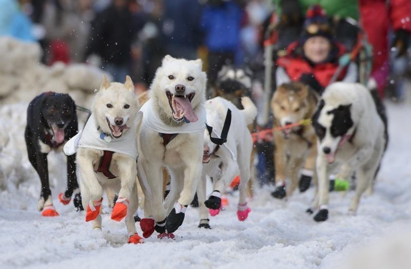 The Joys of Dog Sledding & Dry Mushing | Australian Dog Lover