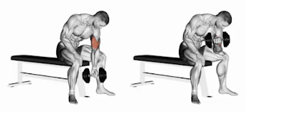 Concentration curl for biceps exercise