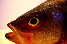 Vivi con gusto come congelare pesce crostacei e molluschi for Cucinare e congelare