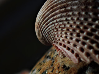 Close up of a sea shell