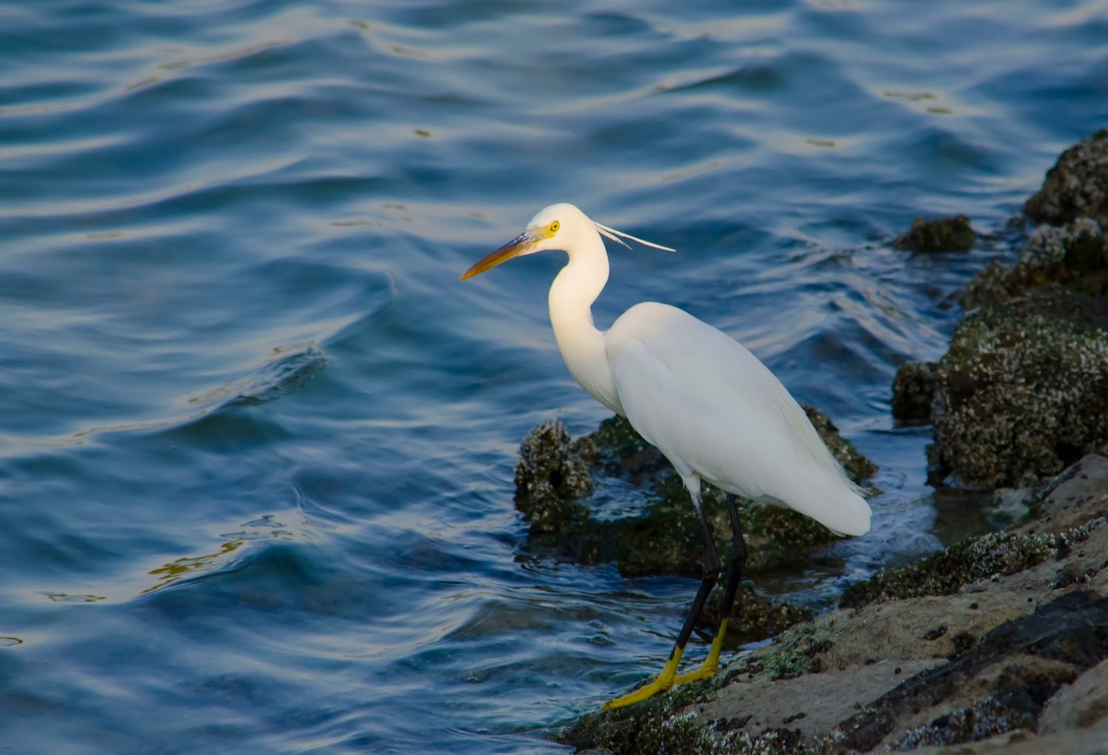 Beautiful Birds at the shores of Abu Dhabi Mangroves near the public park - Photo by Adham Al Oka