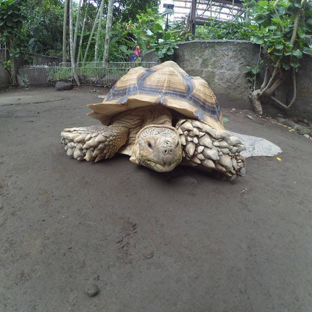 foto hewan langka kebun binatang gembira loka