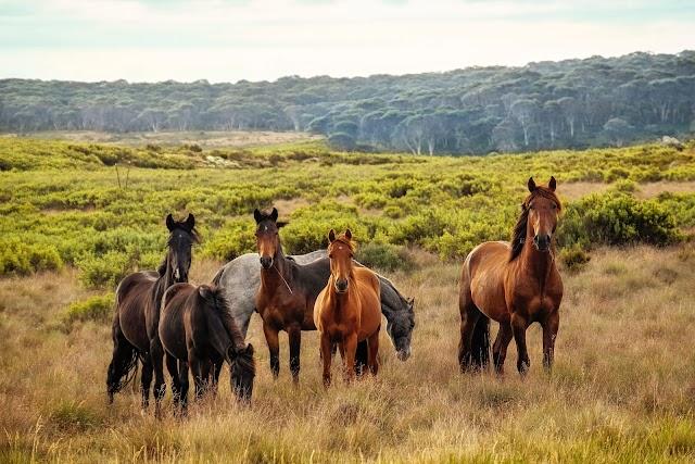 BASIC HORSE CARE FOR BEGINNERS