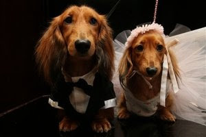 Dogs get married for charity
