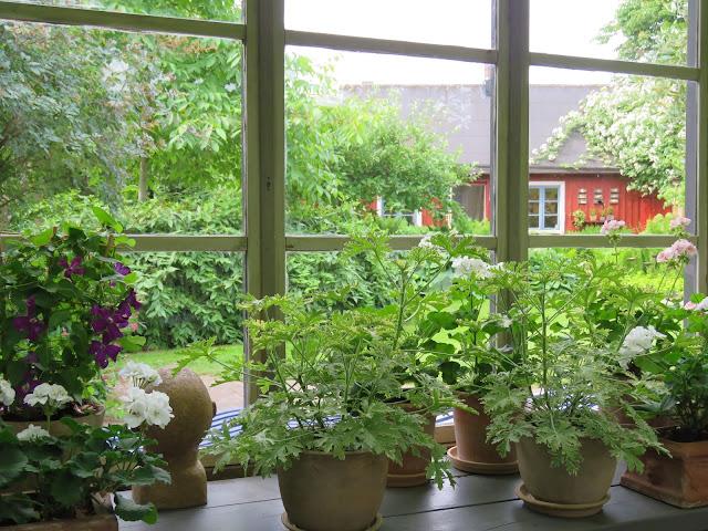 Sett fra innsiden av drivhuset/orangeriet på Solhem. Trädgårdsrundan i Skåne.
