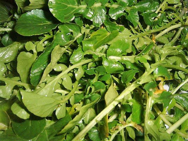 Freshly harvested watercress
