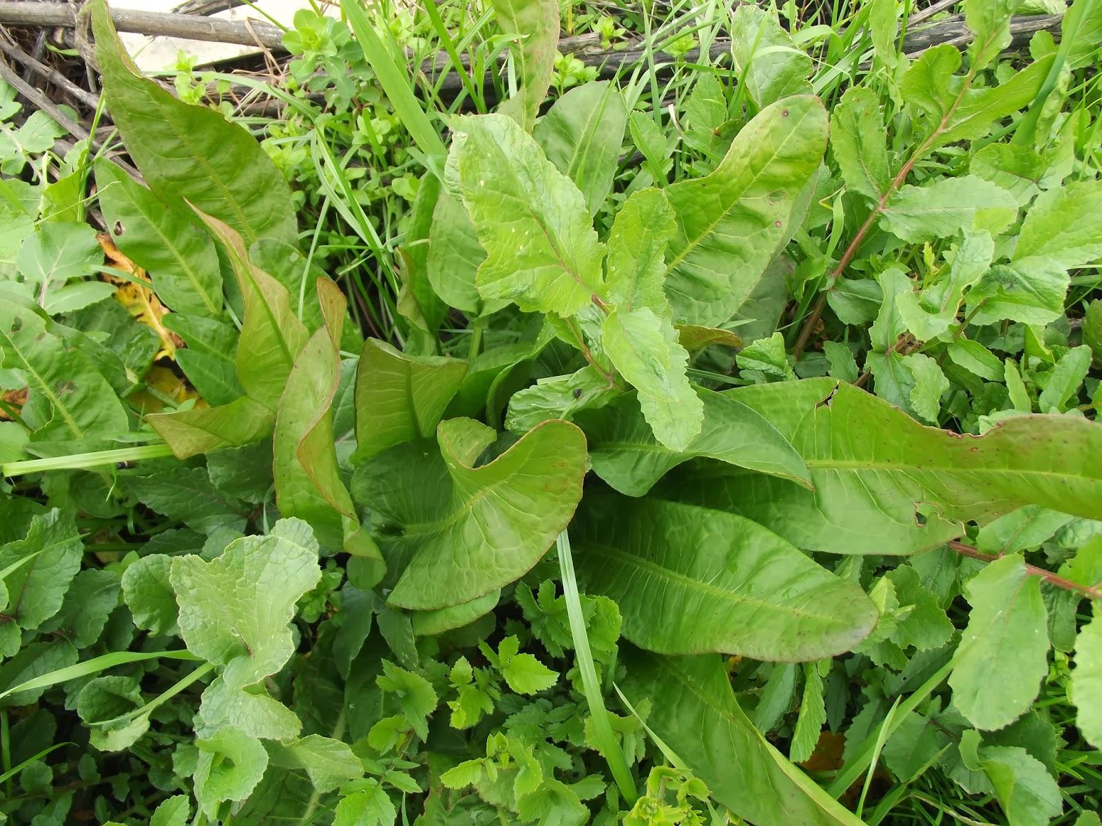 Bahçede baharatlı otlar yetiştiriyoruz