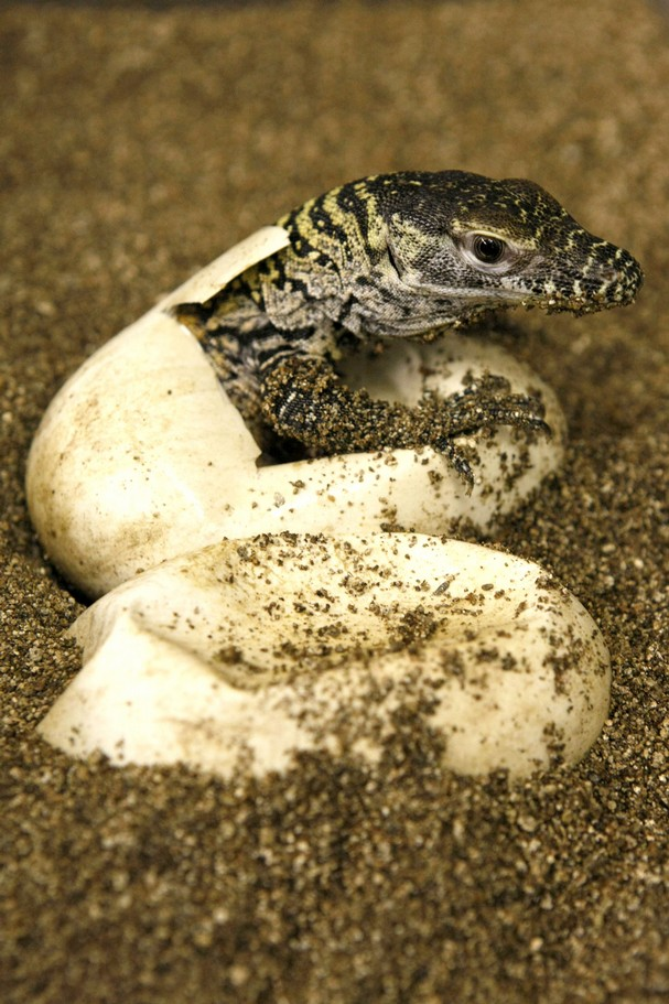 Cute Baby Animals - Page 10 - ReachOut Forums - 86077 |Cute Baby Komodo Dragons