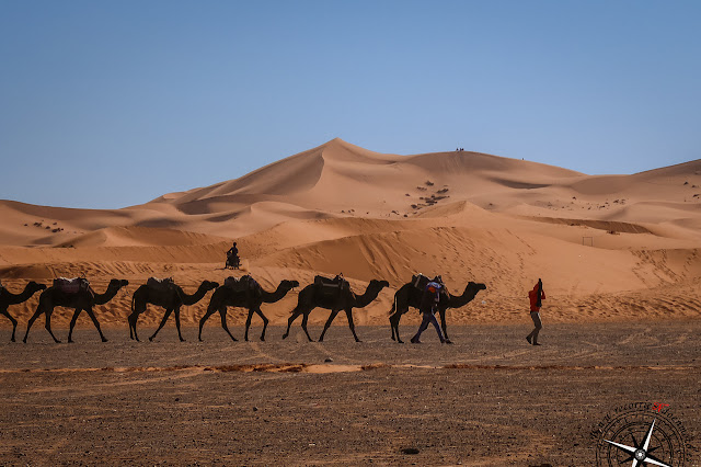 estampas del desierto