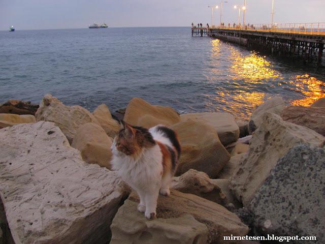 Кипр, Лимассол - кошка у моря, вечерние огни