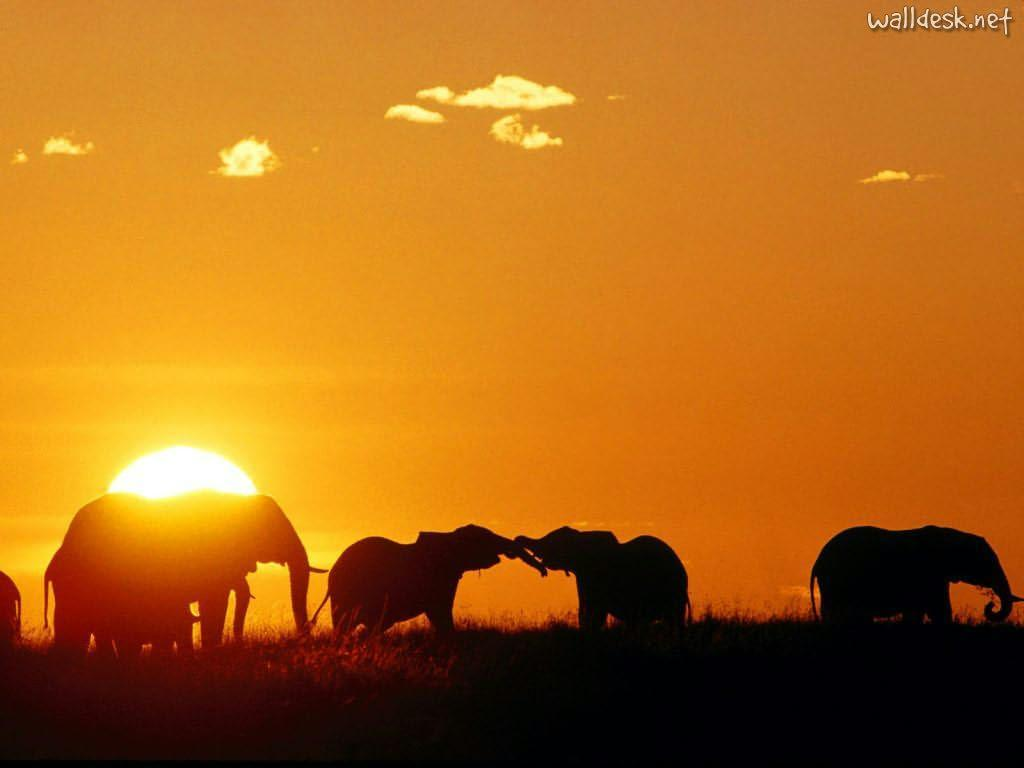 africa_african_elephants