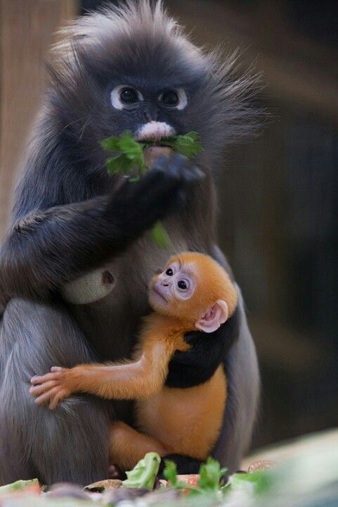 31 Adorable Baby Monkeys That Make You Fall In Love | WittyMania