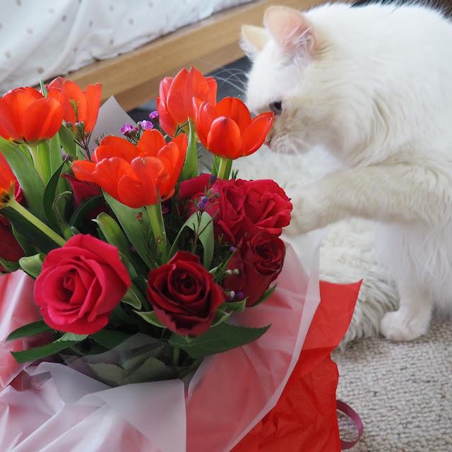 valentine cat