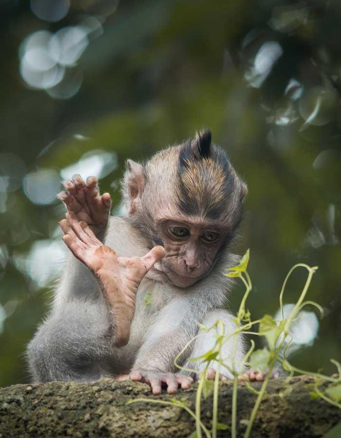 Fasilitas Wisata Ubud Monkey Forest