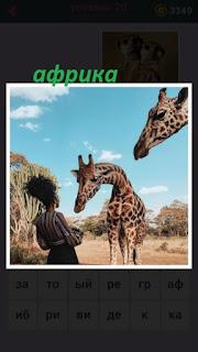 женщина пытается кормить жирафов в Африке