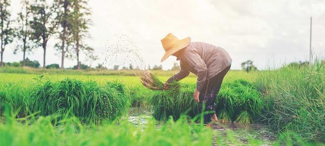 Mujahadah Pertanian Dalam Wahidiyah