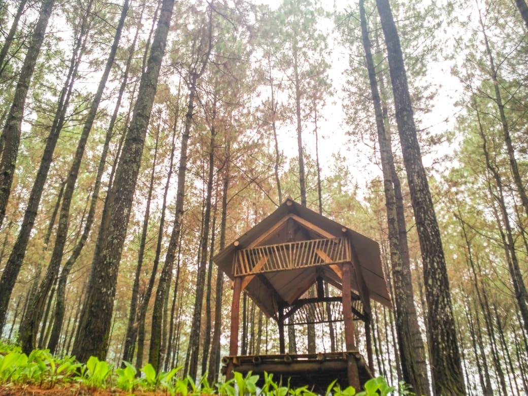 Puthuk Panggang Welut, Keindahan Hutan Pinus dan Suasana Asri Mojokerto