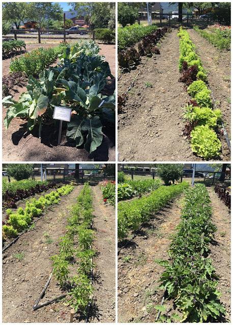Farmstead napa produce