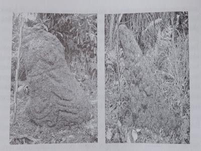 Gambar Peninggalan Megalitik Di Puncak Gunung Subang Kuningan Jawa Barat