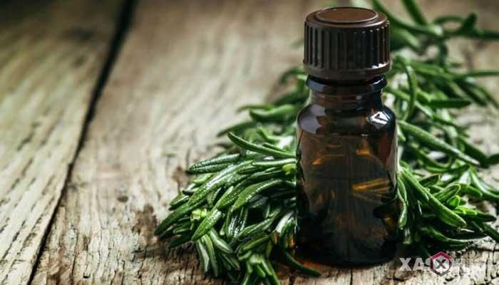 Cara menyembuhkan dan mengobati sariawan dengan tea tree oil