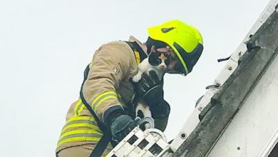 Calico cat rescued after being trapped under roof-mounted solar panels