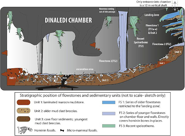 Homo naledi not good candidate for human evolution after all
