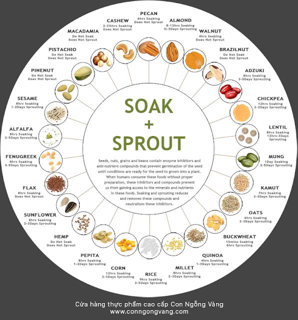 cách ngâm và ăn các loại hạt dinh dưỡng tốt nhất