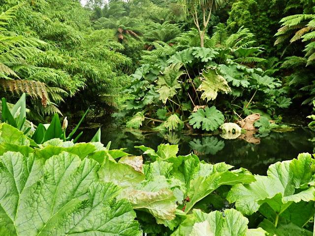 Jungle at Lost Gardens of Helugan