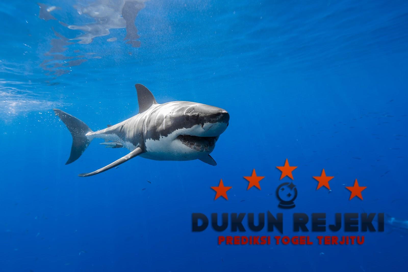 Hewan Laut Yang Paling Berbahaya dan Mematikan
