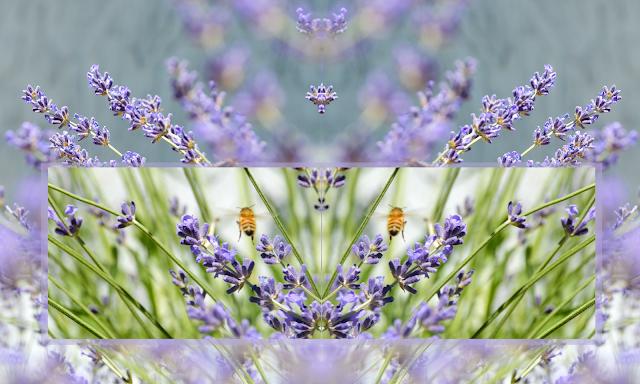 backyard photography nature abstract surreal purple green crown