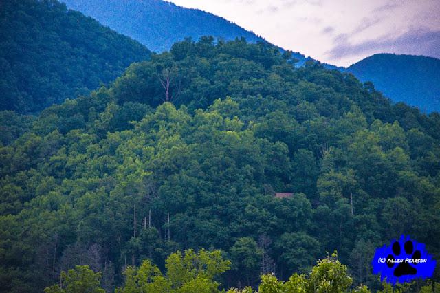 A Mountain's Splendor
