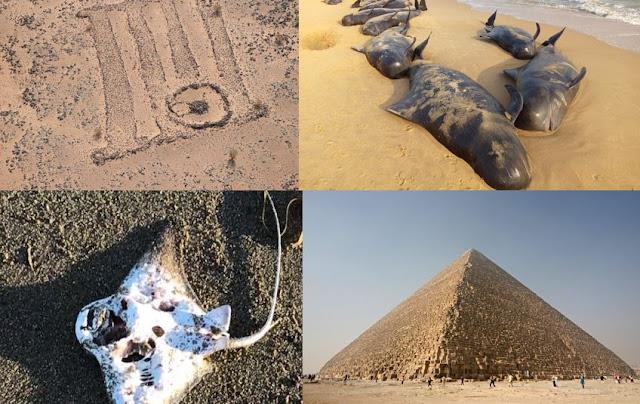 ظواهر علمية,ظواهر غامضة,حيتان,أخطبوط,المملكة العربية السعودية,هرم خوفو,,الفضاء,كلاب زرقاء,الهند