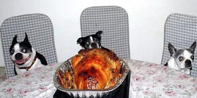 صور حيوانات تسرق الطعام