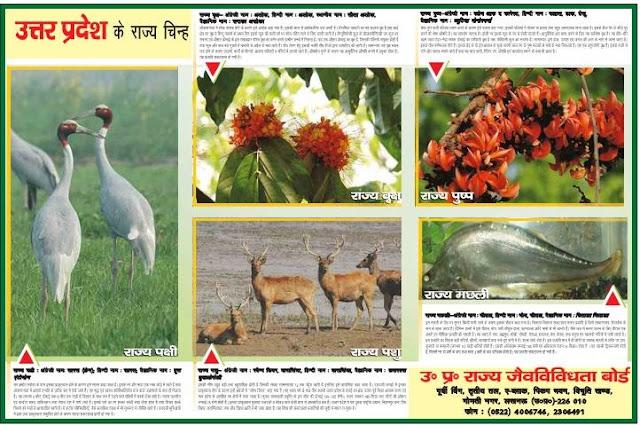 Uttar Pradesh State Symbols