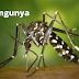 Confirmado o 1º caso de chikungunya em São Luiz Gonzaga
