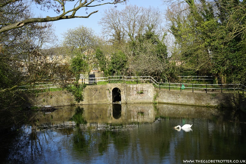Swan and Pike Pool
