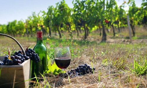 Ανάμικτη ήταν η εικόνα των εξαγωγών ελληνικού οίνου για το 2020 όπως προκύπτει από σχετικά στοιχεία της Κεντρικής Συνεταιριστικής Ένωσης Αμπελοοινικών Προϊόντων (ΚΕΟΣΟΕ). Όπως αναφέρεται σε σχετική ανακοίνωση της Ένωσης, «διαφορετική είναι η εικόνα σε κάθε αγορά ξεχωριστά, μη υπακούοντας σε γενικευμένες αιτιάσεις αν και αίτια θα μπορούσε να είναι το ξέσπασμα της πανδημίας covid 19, γεγονός που θα δικαιολογούσε μια συνολική τάση μείωσης των εξαγωγών, αιτία που δεν ισχύει για όλους τους εξαγωγικούς προορισμούς».