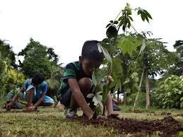 Trees plantation drive