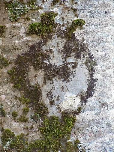 Corteccia d'albero a forma di alieno