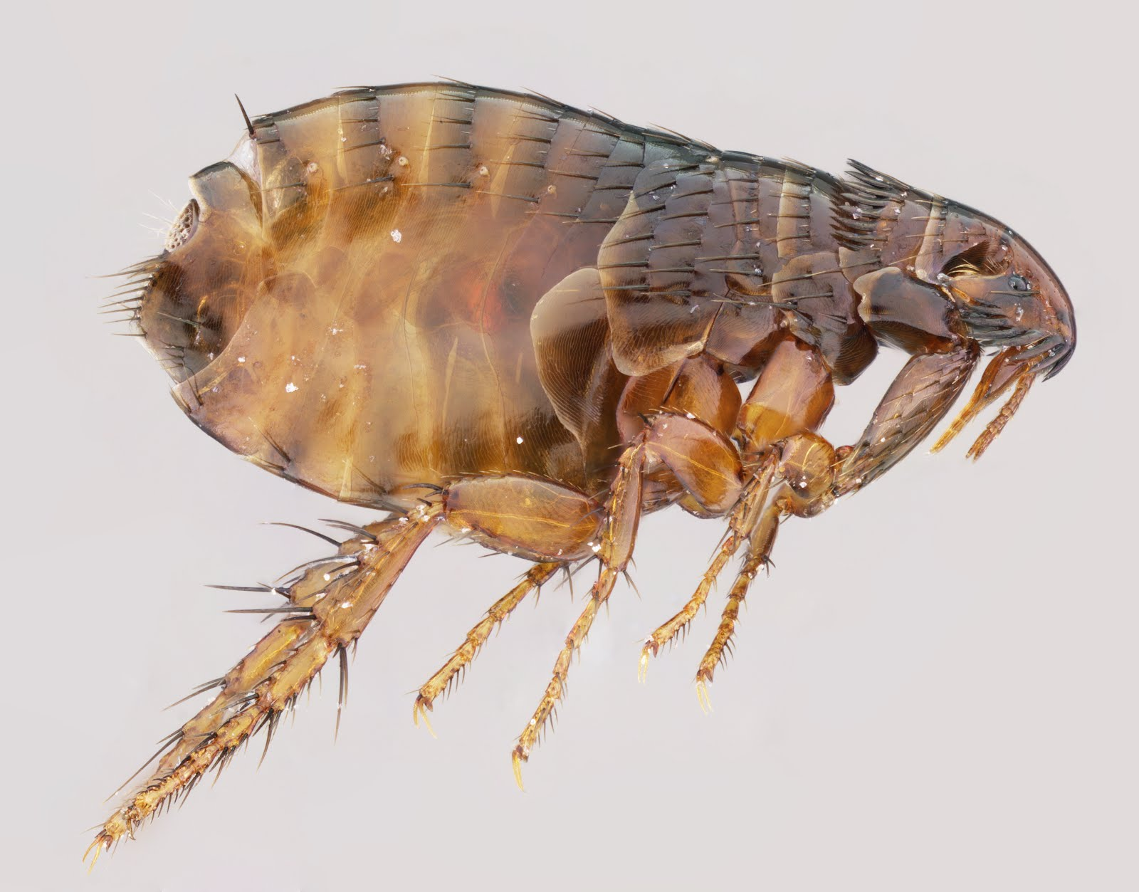 Insect Image of the We...
