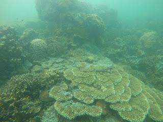 Paket Wisata Laut Murah Pulau Abang Batam