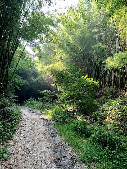 #深草トレイル #大岩神社 #マムシ