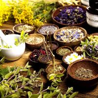 As 9 melhores ervas para limpeza pulmonar e suporte respiratório