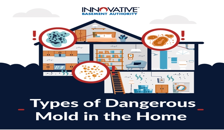 Types of dangerous Mold of the home #Infographic
