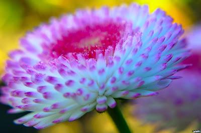 اجمل الصور لشكل ورده جميلة جدا