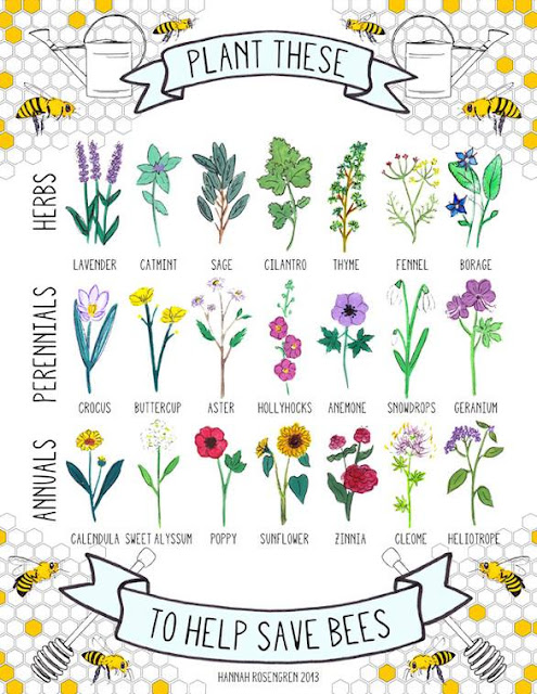 21 Bee-Friendly Plants