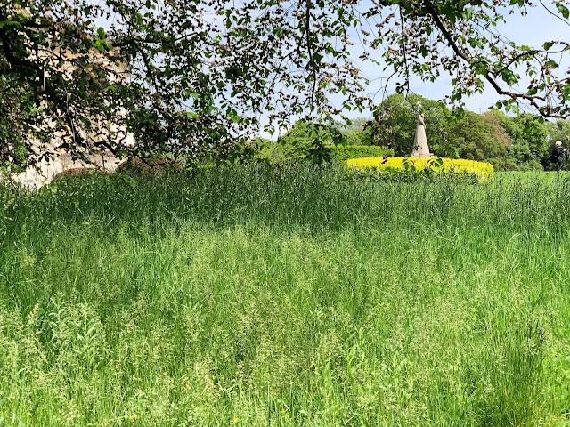 Slottsparken - en oase i hovedstaden vår, Oslo. Tilrettelagt for blomsterenger for insekter IMG_0291 (2)-min